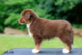 Hurley im Alter von 9 Wochen