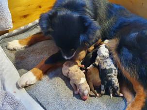 Lexa nach der Geburt