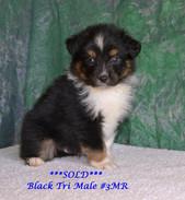#3 Black Tri Rüden
