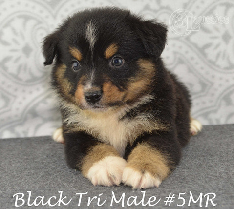 #5 Black Tri Rüde