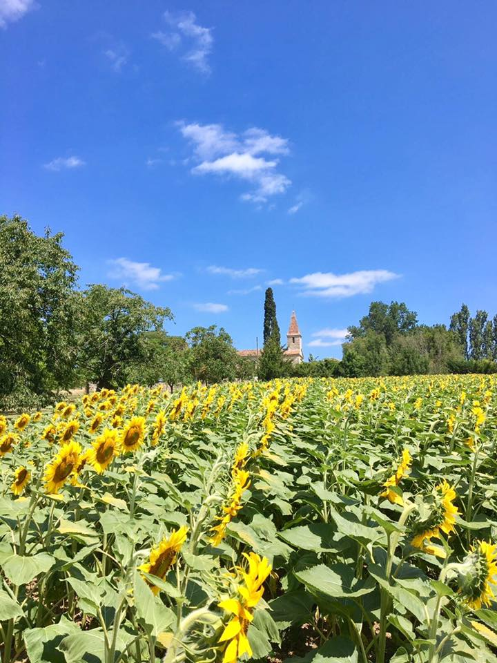 Marcadis church with sunflowers