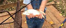 Fish caught at Marcadis Gite