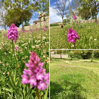 Wild Orchid gardens