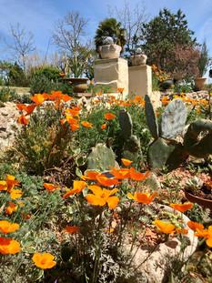Californian poppies.jpg