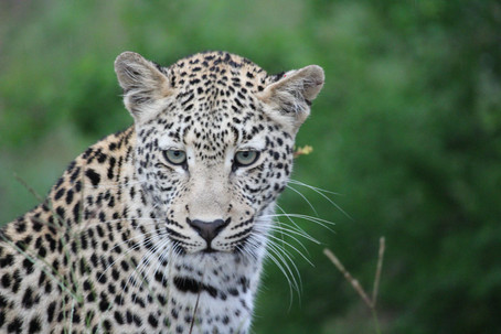 Our Return To The Bushveld