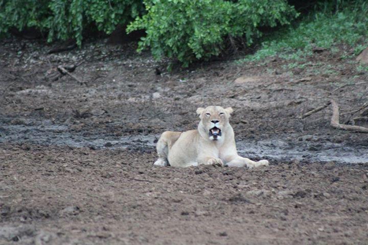 Siyafunda Conservation, South Africa