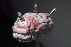 Three Brains Close Up