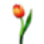 tulp_02.png