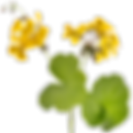 geraniumskopie_geel.png