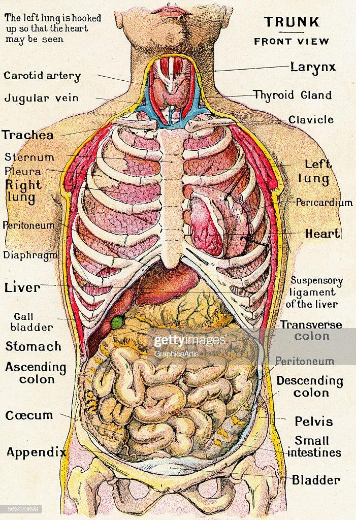 Internal Organs with Black Balls