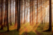 forest-3448818__340.jpg