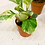 Thumbnail: Kleine kamerplanten