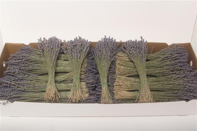 Boeket gedroogde lavendel