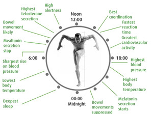 Vücudumuzun 24 saati