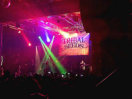 SHOWS OF NOTE: TRIBAL SEEDS