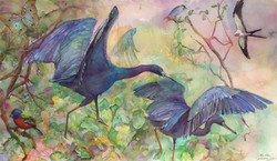 291 Little Blue Herons