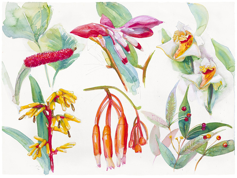 Ecuador Plant Page I 502