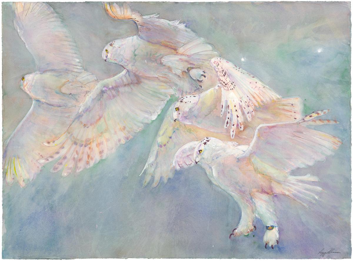 01D Owl Release