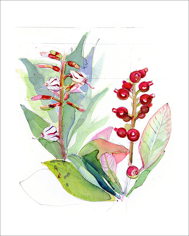 peru plant E
