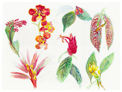 Ecuador plant page II 510