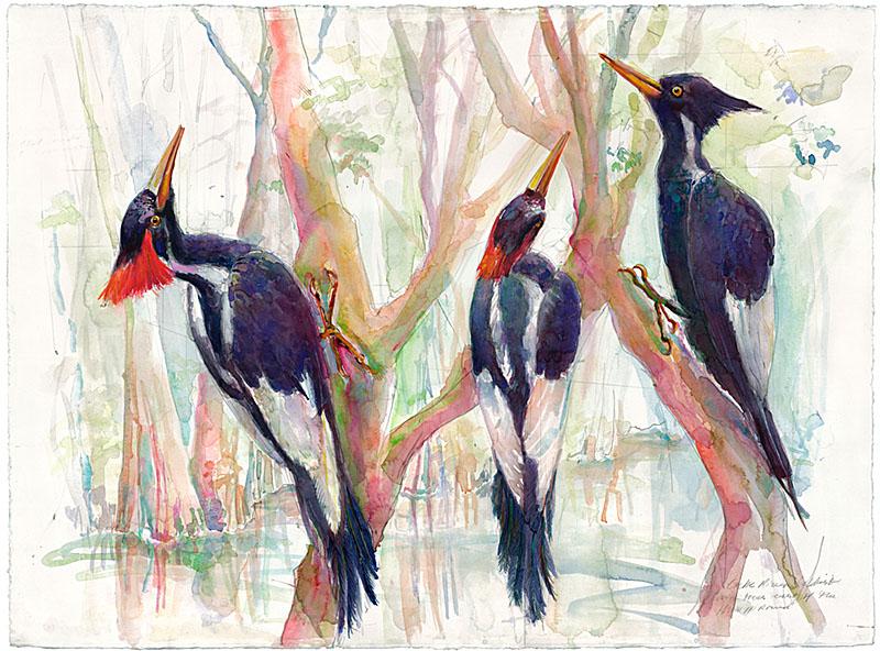 150 Woodpecker