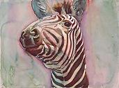 Zebra Head_1.jpg