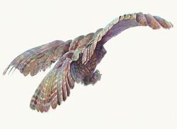 126 Fly Awy Owl