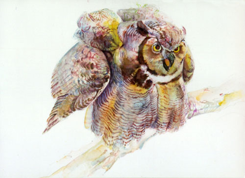 52 Great Horned Owl