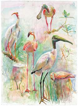132 Florida Birds