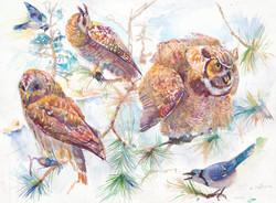 293 LONG EARED OWL