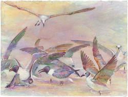 01N BIRD MOVEMENT SHORE BIRDS