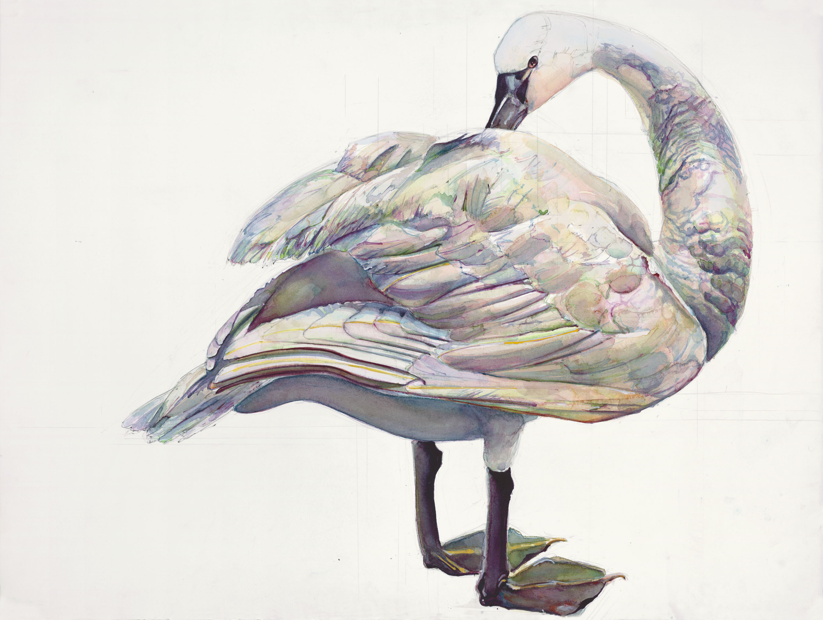 104 Swan
