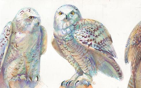 01A THREE OWLS 1