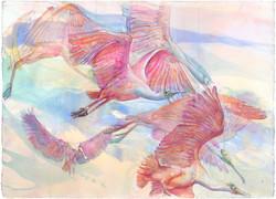 43 Spoonbill flight