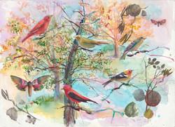 204 Five Birds Botanic