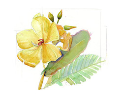 peru plant c_2