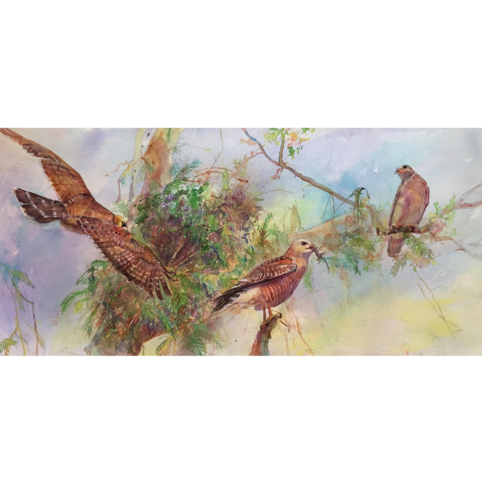 96C New Birds