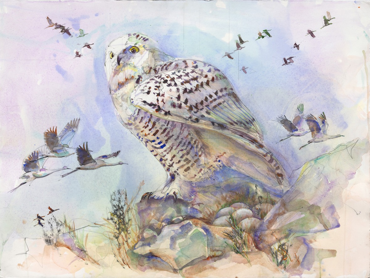 50 Snowy Owl Flight