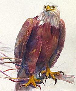 128 eagle on branch