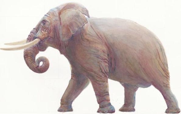 405 Elephant II
