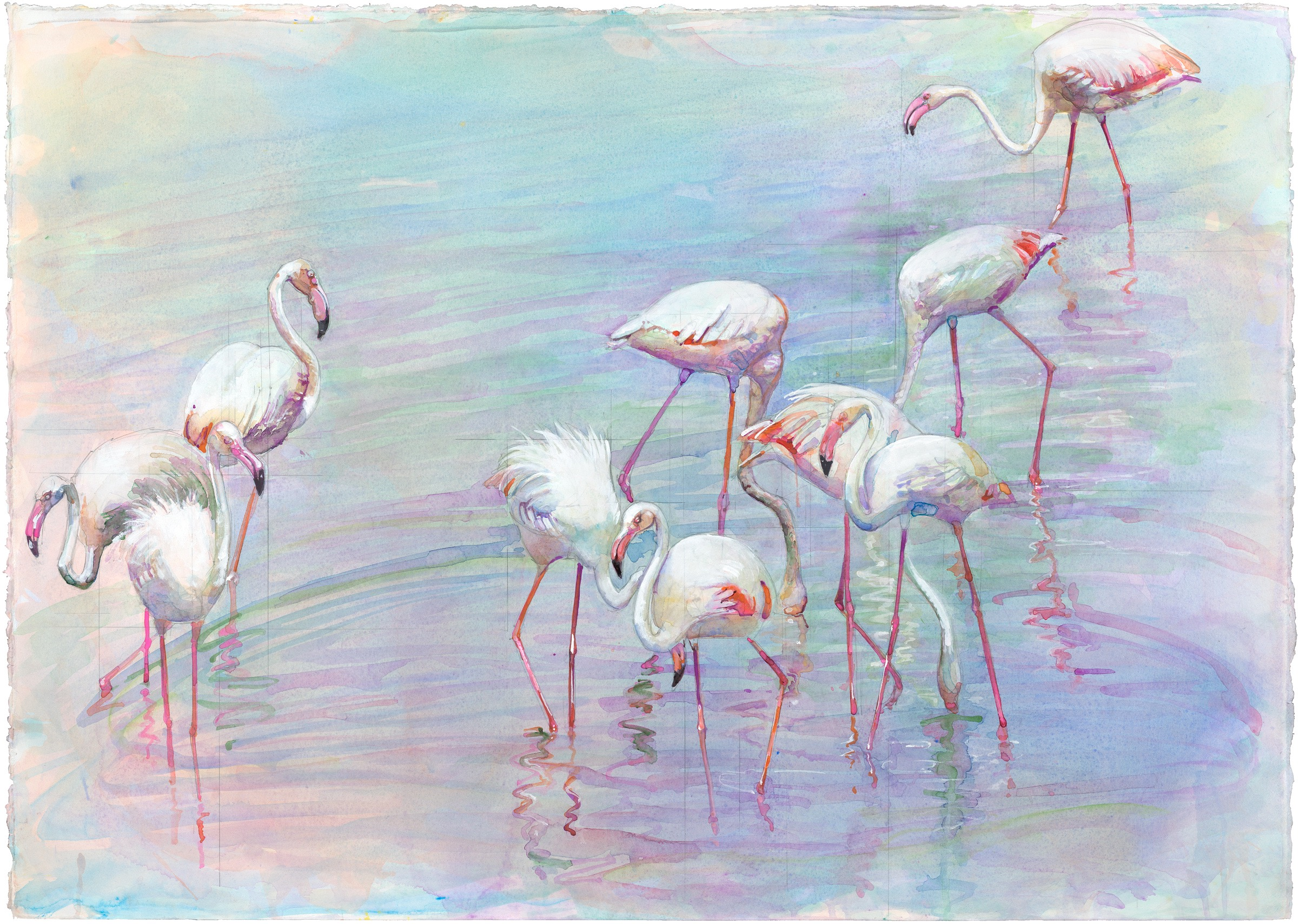 97B Flamingo FLock