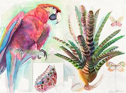 144 Scarlet Macaw looking