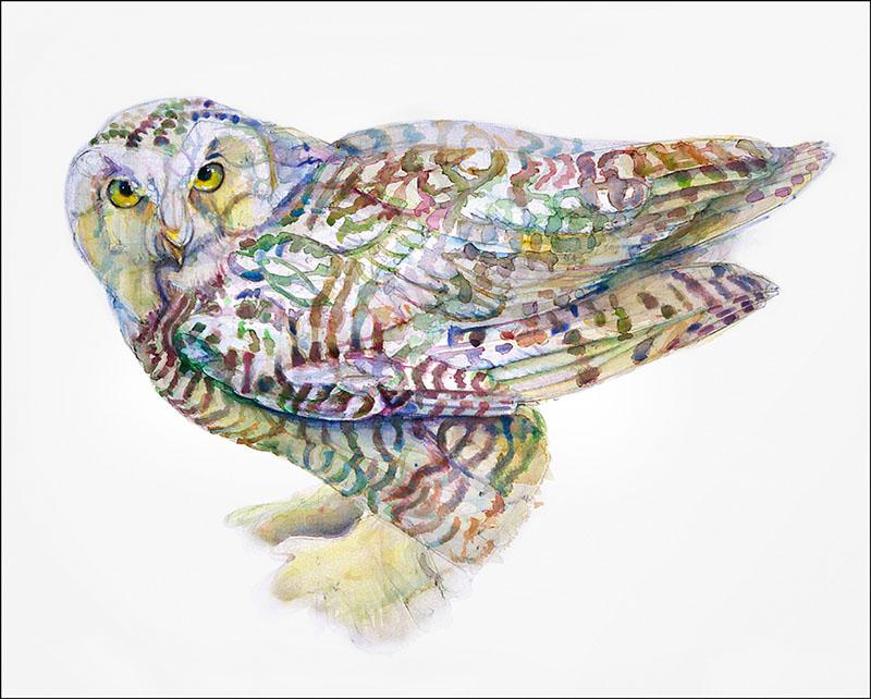 140 Snowy Owl