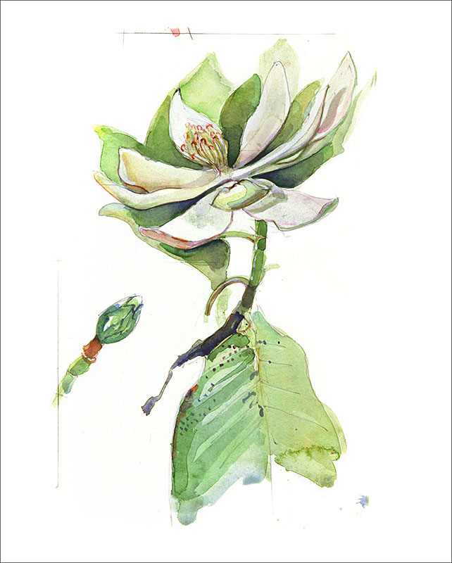 peru plant J