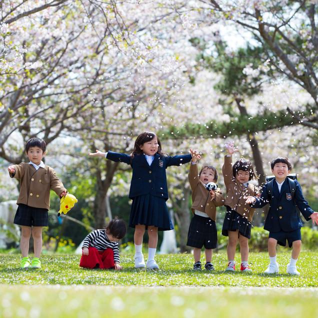 鹿児島桜写真入学入園