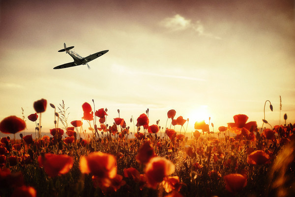 Spitfire Poppies
