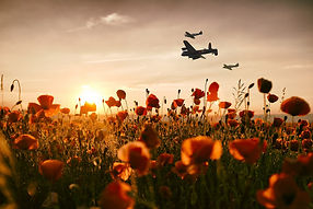 Poppy Field Tribute Aviation Art