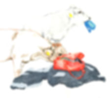 tishi-buch-web.jpg