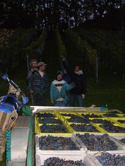 Vendange 2007