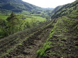 avant la plantation